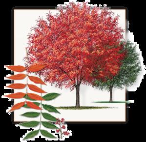 TreeofGratitude